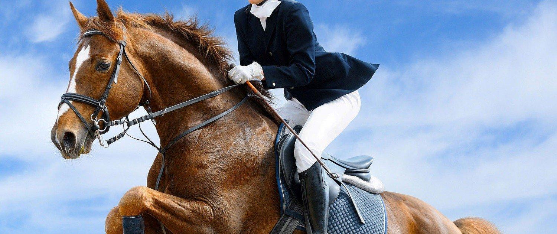 Scuola di equitazione e corsi di lingua inglese